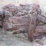 Paroi en bois bien conservée-2©pôle archéologique/CD02
